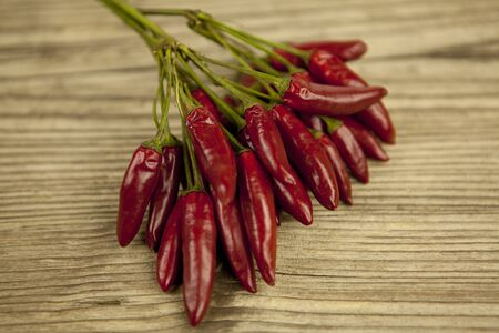 spicy plant: red hot chilli pepper with basil and garlic on wooden background