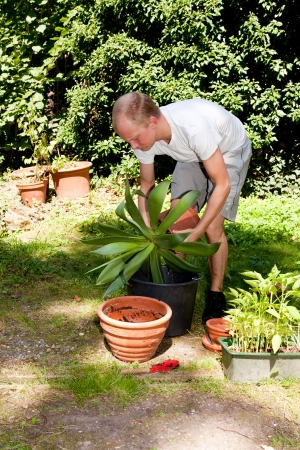 gardener repot green aloe vera plant in garden in summer photo
