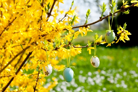 easter egg decoration hanging on forsythia tree outdoor in spring photo