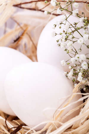 three wishes: Three plain white undecorated Easter eggs nestling in a straw nest with a delicate dainty spray of Babys Breath flowers to celebrate springtime and the Easter holiday Stock Photo