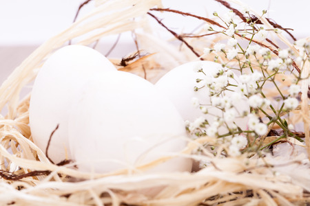 undecorated: Three plain white undecorated Easter eggs nestling in a straw nest with a delicate dainty spray of Babys Breath flowers to celebrate springtime and the Easter holiday Stock Photo