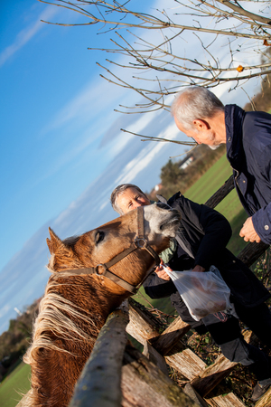 Elderly couple laughing and having fun petting a horse in a paddock on a cold sunny winter day as they enjoy the freedom of their retirement photo
