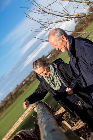 老夫婦の笑いや楽しい彼らは彼らの退職の自由を楽しむ冬の日日当たりの良い寒さにパドックで馬をペッティング