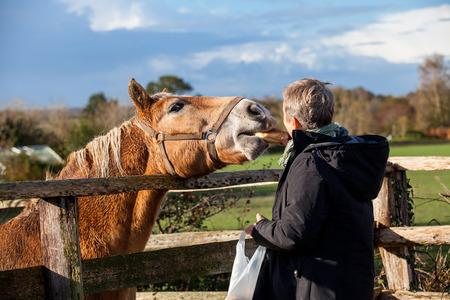老夫婦の笑いや楽しい彼らは彼らの退職の自由を楽しむ冬の日日当たりの良い寒さにパドックで馬のふれあい 写真素材