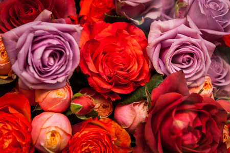 flower seller: Bunches of colorful fresh roses in red, orange and lilac for sale at a flower seller, nursery or store in a romantic background symbolic of love Stock Photo
