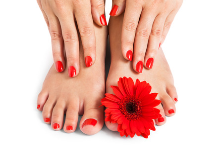 Woman with beautiful red manicured nails displaying her bare feet with her hands on her ankles with a fresh red Gerbera daisy in a beauty and fashion concept