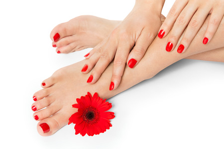 pedicure: Woman with beautiful red manicured nails displaying her bare feet with her hands on her ankles with a fresh red Gerbera daisy in a beauty and fashion concept