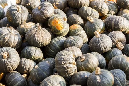 cucurbita: Green Grüner Hokkaido cucurbita pumpkin pumpkins from autumn harvest on a market