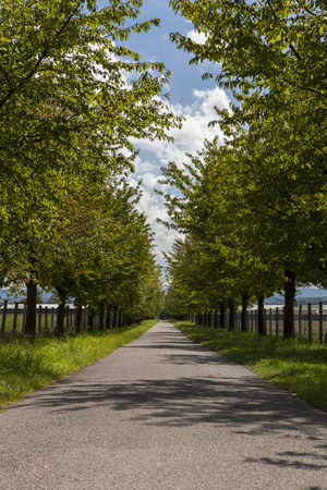 straight line: Scenic rural road lined on either side with leafy green trees and farm fences receding into the distance in a straight line under a sunny cloudy blue sky