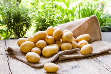 Farm fresh baby potatoes on a hessian sack Displayed on a rustic wooden table at farmers market, a healthy nutritious root vegetable popular in vegetarian cuisine and vegan