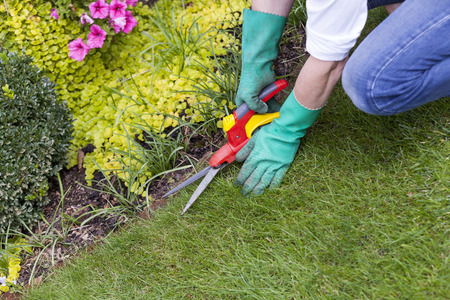 Close Up of Gloved Hands Trimming Grass with Clippers at Edge of Garden