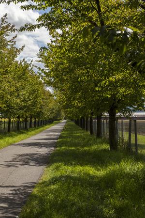 arboles frondosos: Camino rural esc�nico flanqueada a ambos lados con �rboles de hoja verde y las cercas de la granja retroceso en la distancia en l�nea recta bajo un cielo azul nublado soleado