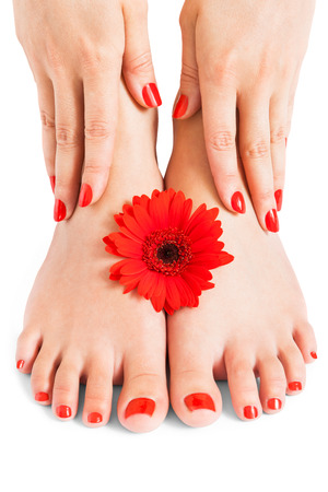 manicure and pedicure: Woman with beautiful red manicured nails displaying her bare feet with her hands on her ankles with a fresh red Gerbera daisy in a beauty and fashion concept