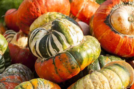 miter: Miter Turk Turban Cucurbita pumpkin pumpkins from autumn harvest on a market
