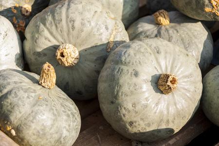 cucurbita: Blue Blue Hokkaido pumpkin Cucurbita pumpkins from autumn harvest on a market
