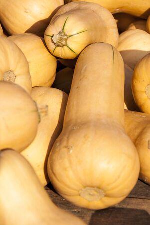cucurbita: Butternut butternut pumpkin Cucurbita pumpkins from autumn harvest on a market