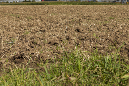 Harvested potato field with rotovated or plowed earth and the odd remaining potato with green crops in visible in the distance on agricultural landscape photo