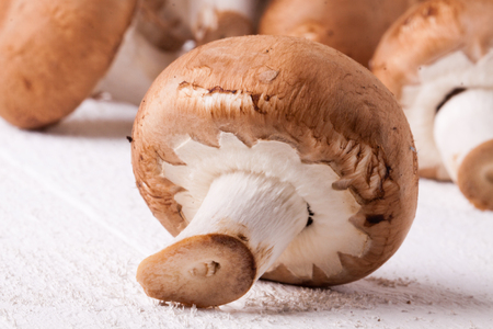 agaricus: Fresh brown portobello or agaricus mushrooms on a white counter ready for use as a savory cooking ingredient or in vegetarian and vegan cuisine