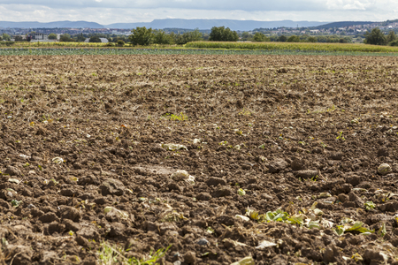 land use: Harvested potato field with rotovated or ploughed earth and the odd remaining potato with green crops visible in the distance in an agricultural landscape Stock Photo