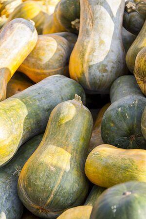 cucurbita: Sonca cucurbita pumpkin pumpkins from autumn harvest on a market