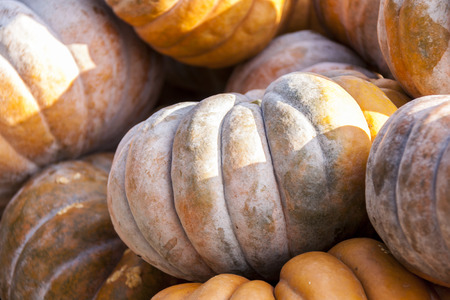 cucurbita: Muscade de Provence cucurbita pumpkin pumpkins from autumn harvest on a market Stock Photo