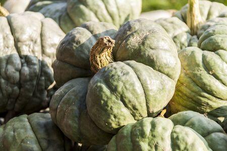 cucurbita: Triamble Tristar cucurbita pumpkin pumpkins from autumn harvest on a market Stock Photo