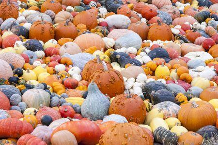 cucurbita: Different maxima and pepo cucurbita pumpkin pumpkins from autumn harvest on a market