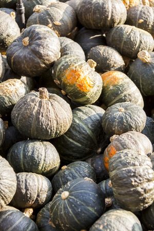 ner: Green Grüner Hokkaido cucurbita pumpkin pumpkins from autumn harvest on a market