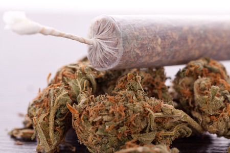 drug abuse: Close up of dried marijuana leaves and tied end of marijuana joint with translucent rolling paper on white background