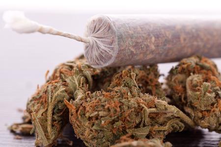 drogadiccion: Primer plano de hojas secas de marihuana y extremo atado de cigarrillo de marihuana con papel laminado transl�cido en el fondo blanco