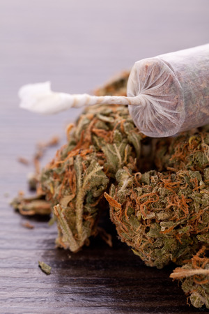 rolling paper: Close up of dried marijuana leaves and tied end of marijuana joint with translucent rolling paper on white background