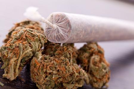 Close-up van gedroogde marihuana bladeren en gebonden einde van marihuana gezamenlijke met doorschijnende rollen papier op een witte achtergrond