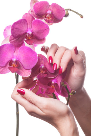 Manicured nails painted a deep red caress dark pink flower pedals against white background Stok Fotoğraf
