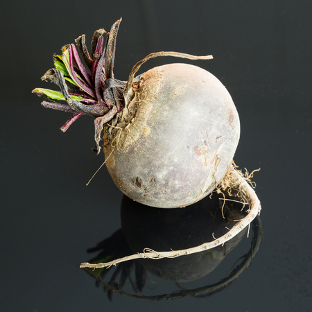 Three farm fresh whole raw beetroot in a close up view on a black surface in a healthy diet or vegetarian concept