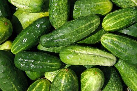 Close-ups of fresh cucumbers. Natural source of vitamins