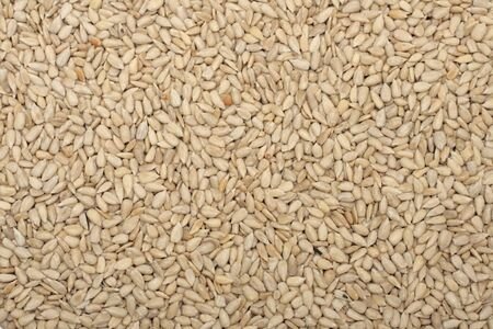 Close-up of shelled sunflower seeds Stock Photo - 6396460