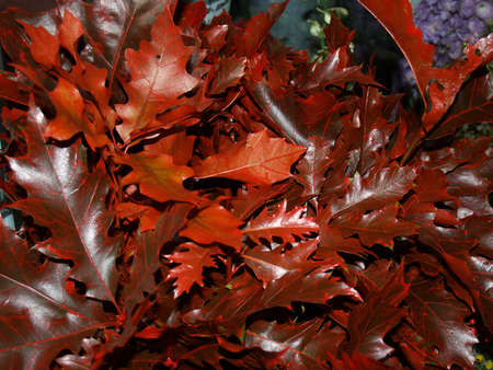 frondage: Red autumn leaves on the ground Stock Photo