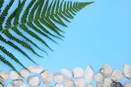 seashells on tropical background, place for text