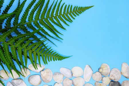 seashells on tropical background