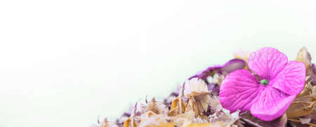 Background from dry wildflowers. Spa, ecology, beauty or homeopathy concept. Banner. Copy space