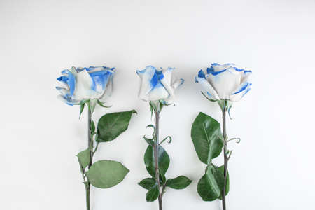 Blue roses on a white background. Concept romantic greeting card congratulation on Valentine's Day, International Women's Day, wedding or anniversary. Copy space Imagens