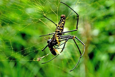 Big spider in jungle photo