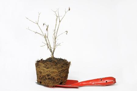 albero secco: giardino pala con albero secco