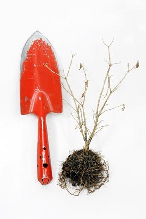 albero secco: Giardinaggio pala e albero secco