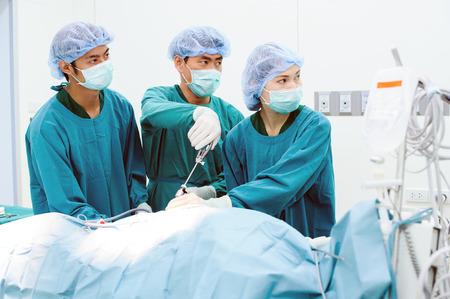 獣医の医者の手術で腹腔鏡下手術 写真素材