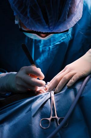 手術室の獣医外科医
