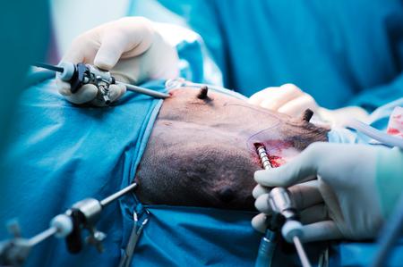 laparoscopic: veterinarian doctor in operation room for laparoscopic surgical