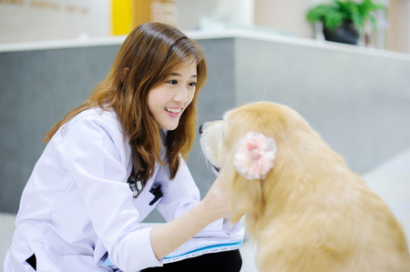 Young veterinarian with the cute dog at hospital Reklamní fotografie - 31387017