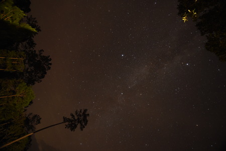 Night sky with the Milky Way over the forest and trees,Thailand photo