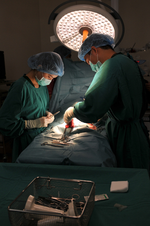A veterinarian surgeon working in a small operating room with an assistant photo